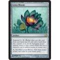 [英語版]《睡蓮の花/Lotus Bloom》(MMA)